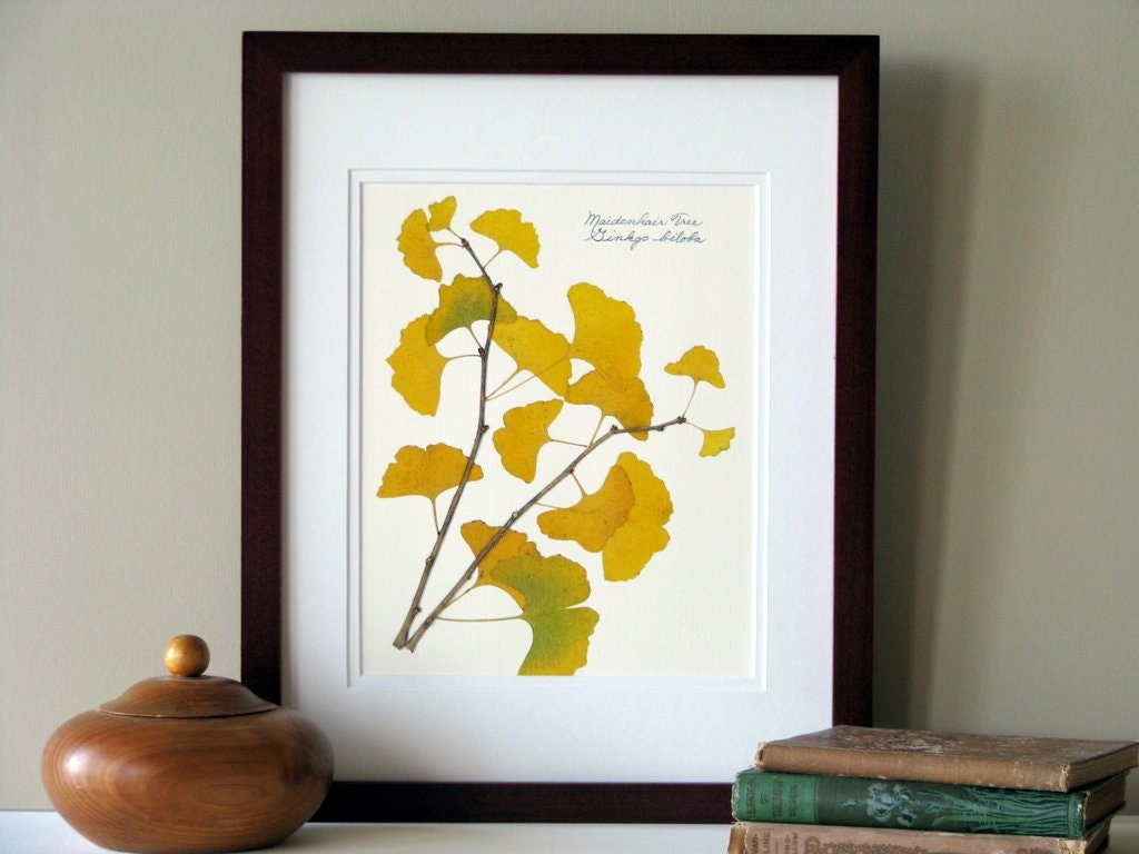 Pressed leaf print 11x14 double matted pressed Ginkgo