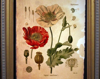 Vintage Poppy Flower Art - Red Poppy - Vintage Poppies Flower Art Print -  on Tea Stained Paper- father's day gift- graduation gift