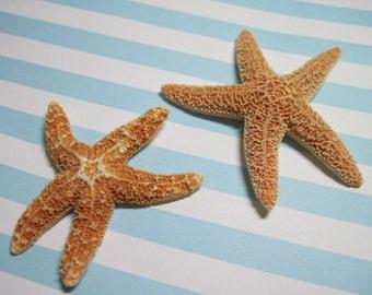 Mini Orange Starfish - Sugar Starfish - Sea Star Gems - Ask for Int'l ship rates