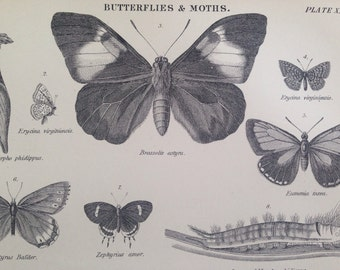 1875 Original Antique Butterfly & Moth Engraving - Insects - wall decor - home decor - matted and ready to frame - 14 x 11 inches