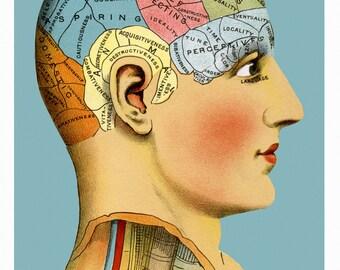 Phrenology Head 11 x 17 inch poster
