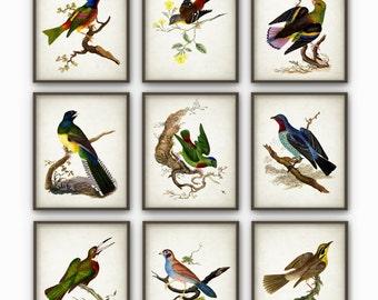 Bird Wall Art Print Set of 9 - Bird Poster Set - Bird Book Plate Illustration - Colorful Bird Art - AB302
