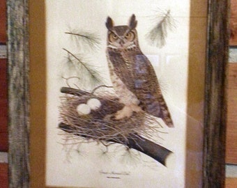 Framed 1974 limited edition wildlife print: Great Horned Owl by Thomas J. Allen