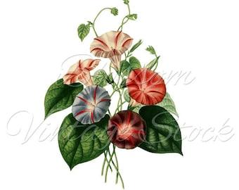 Floral Print, Vintage Wall Art, Floral Bouquet, Digital Image, Vintage Illustration for Print, Digital Artwork- INSTANT DOWNLOAD - 1737