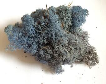 Reindeer Moss Lavender Blue 2 OZ Bag Medium Bag