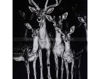 Deer, Limited edition print of graphite on watercolour drawing
