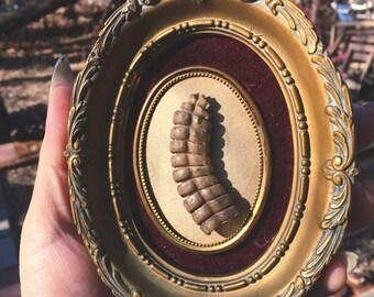 Rattlesnake rattle cameo hanging