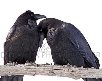 Raven Bond Raven Cuddles Photo Print