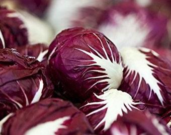 Radicchio (Chicory) Seeds- Verona Red- 500+ Seeds