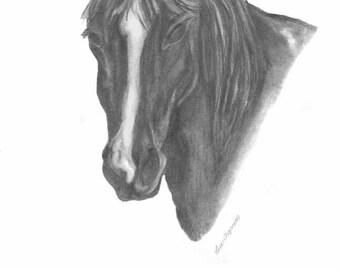 """Horse Grafite 8.5 x 11"""" Sketch Print"""