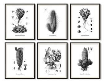 Botanical prints black white, Cactus print, Black and white print set, Set of 6 prints, Printable botanical art, Set of 6 wall art, 6 JPG