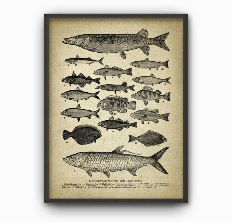 Jahrgang Fisch Wand Kunstdruck antike Fisch Platte