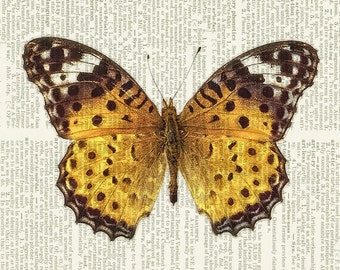 butterfly, golden brown print