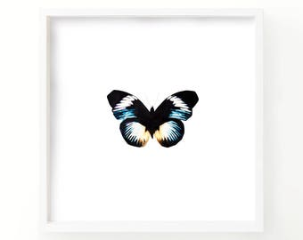 Watercolor Butterfly Print - Living Room Decor - Watercolor butterfly - Fine Art - Nature Print - Gallery Wall - Wall art - Gift for Her