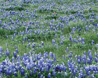 Vinyl Backdrop Bluebonnets Backdrop Spring Blue Bonnets Sitters Family Field by Old Farm Flowers Fairytale Composite Wedding bridal backdrop