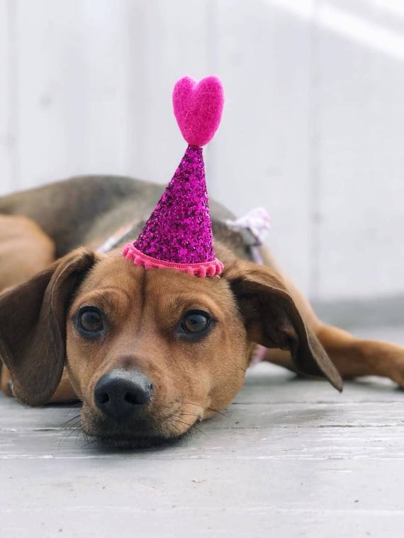 Heart Hat || Dog Party Hat  ||February Birthday || Pink and Red || Love