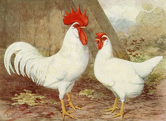 Vintage Rooster and Hen White Leghorn Chicken Printable Farm