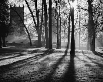 Between the trees, fine art monochrome photography