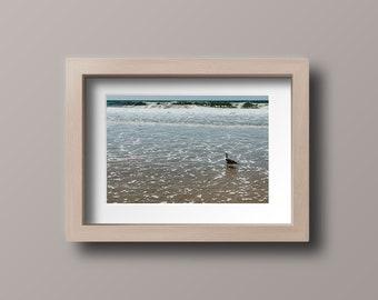 Seagull Wading Print