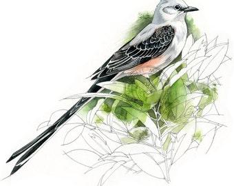 Scissor-tailed Flycatcher - bird wildlife art - nature print of original artwork