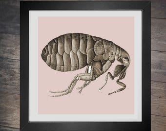 Cross Stitch Pattern Flea pdf counted crossstich scientific insect illustration creepy bug  x stitch lol embroidery INSTANT DOWNLOAD