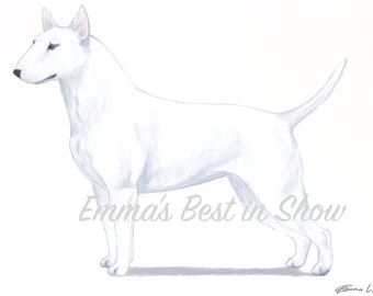 White Miniature Bull Terrier Dog - Archival Fine Art Print - AKC Best in Show Champion - Breed Standard - Terrier Group - Original Art Print