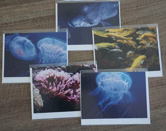 Set of FIVE Sea Life Note Cards