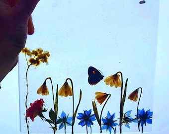 Preserved Botanical Butterfly Window / Wall Hanging, Sun Catcher, 9x9, Ready to ship!