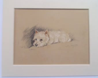 "Cairn Terrier Scottie  dog print by Lucy Dawson dated 1935 in 10""x8"" mount ready to frame"