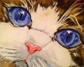 Wide blue eyed kitten