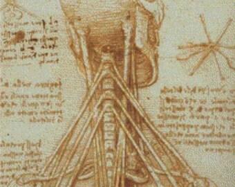 Anatomy of the Neck PDF Cross Stitch Pattern