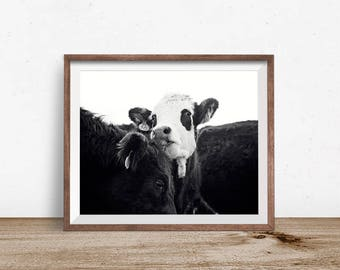 Cow Photography in Black and White | Farmhouse Wall Art