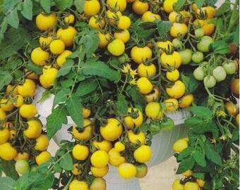 Tomato AZTEK seeds/dwarf yellow tomato seeds/balcony pot tomato seeds/ 0,1 g/best before 2020