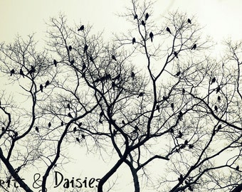 The Birds - 8 x 10 Fine Photograph - Nature Photography