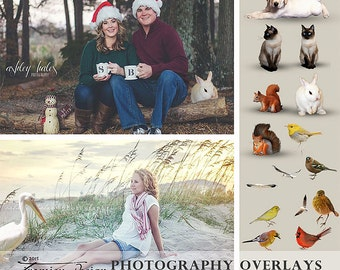Photography Overlays-Animals, Birds, Photo Overlays for Adobe Photoshop or PSE, INSTANT DOWNLOAD