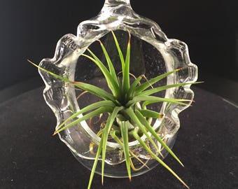 Air Plant Glass Tarrarium