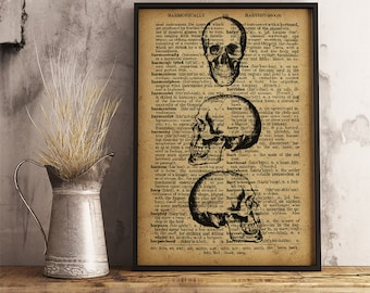 Human Skulls Medical Poster, Anatomy Art Print Gift for a medical student or for Doctor's office decor, Skulls Anatomy Print (HA16)