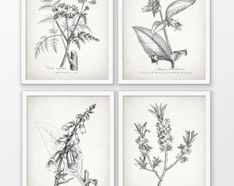Antique Botanical Print Set of 4 - Botanical Print - Plant Drawing Print - Botanical Art Decor - Set Of Four Prints #1700 - INSTANT DOWNLOAD