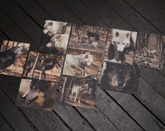 Wolf photographs, blank notecards, set of 10