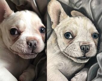 Custom Pet Portrait In Pastel