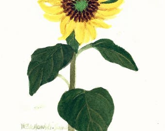 Yellow Sunflower Original Watercolor