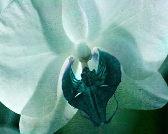 Orchid Flower Abstract Surreal Art Print - Aqua Green Floral Home Decor Modern Wall Art Macro Photograph