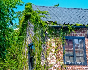 Ivy Covered Home - Downtown Charleston - Photographic Print