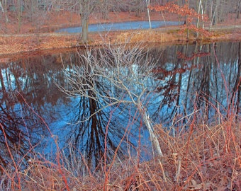 Reflection Water Pond Trees Branches Nature Springtime Home Office Decor
