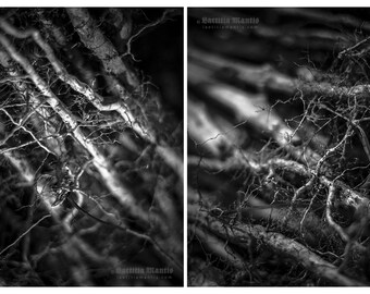 Roots | Black & white photography | 2 prints | Limited edition