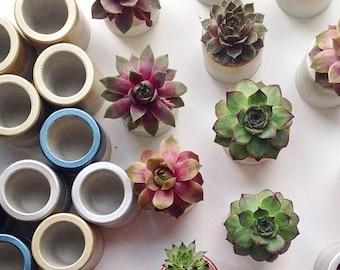 Mini Succulents, Cement Planter, Succulent Favors, Succulent Planter, Succulent Plant, Mini Planter, Concrete Planter, Give Back Party Favor