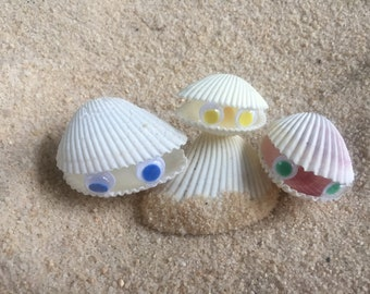 Sea shell Clam Set Clams Clam Animal Beach Décor Handmade Seashell