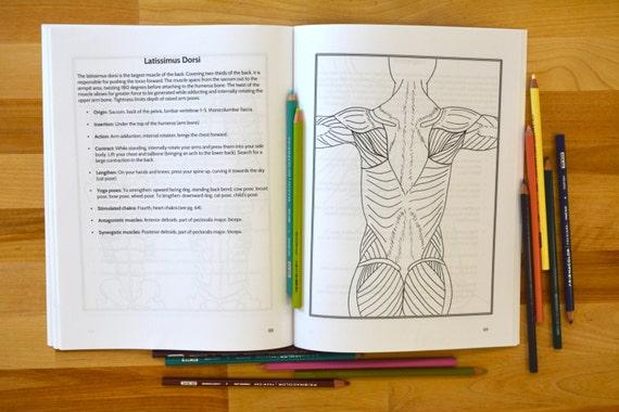 Groß Anatomisches Malbuch Bilder - Framing Malvorlagen ...