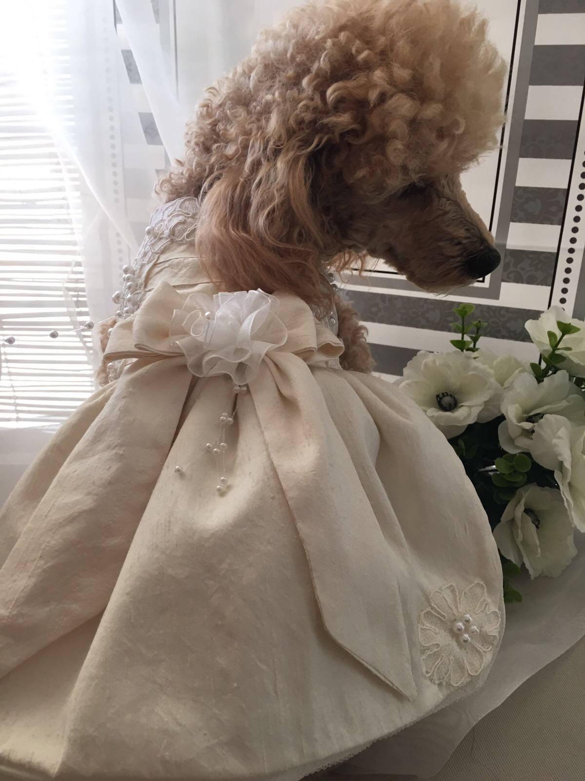 Ausgezeichnet Hunde Brautkleider Bilder - Brautkleider Ideen ...