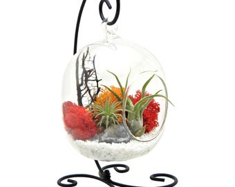 "Air Plant Terrarium with Geode Crystal / 6"" Oval Glass / Sunburst On Ice"
